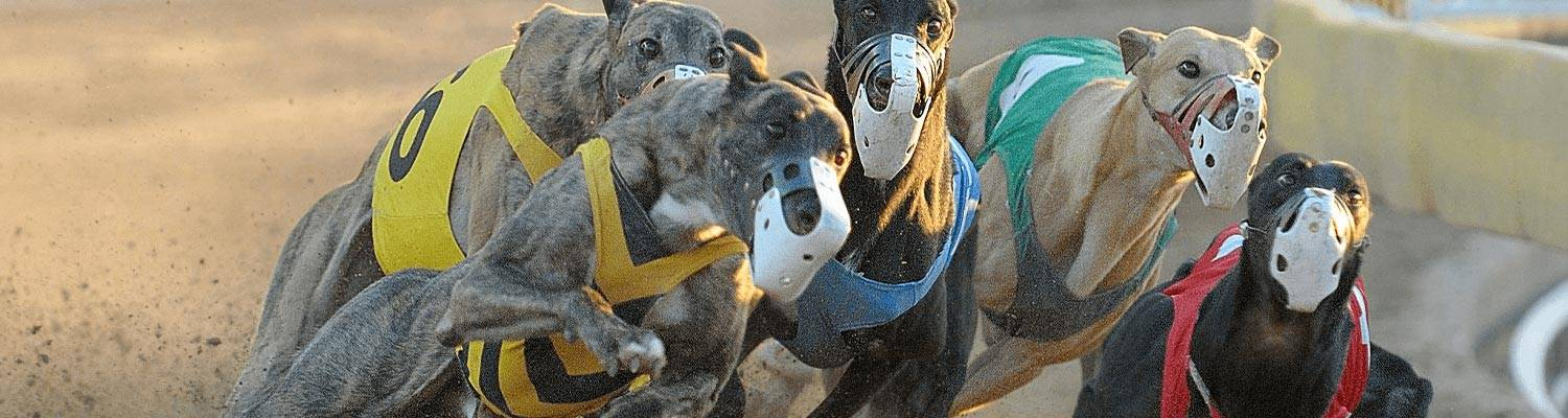 Greyhound Dogs Racing | OTB