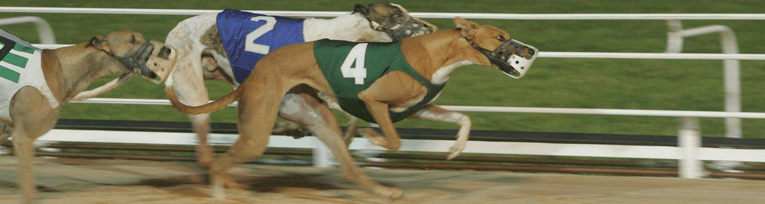 Greyhound Dogs Racing | OTB - How to Wager